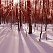 Winter Bling Art Print