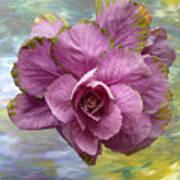 Winter Cabbage Art Print