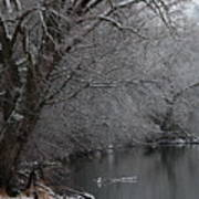 Winter Calm Art Print