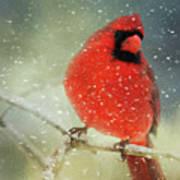 Winter Card Art Print