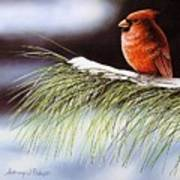 Winter Cardinal Art Print