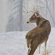 Winter Coat Buck Art Print