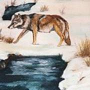 Winter Coyote Art Print
