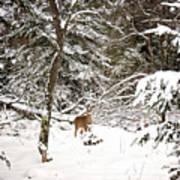 Winter Doe In The Upper Peninsula Art Print