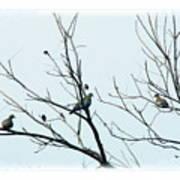 Winter Doves Art Print