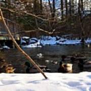 Winter Ducks Art Print