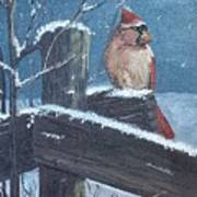 Winter Female Cardinal Art Print