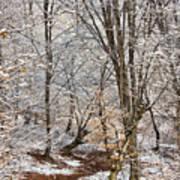 Winter Forest Art Print by Gabriela Insuratelu