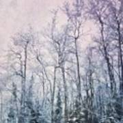 Winter Forest Art Print by Priska Wettstein