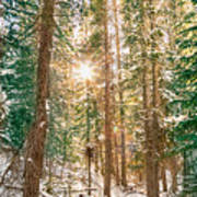 Winter Forest Sunshine Art Print