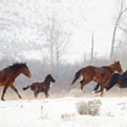 Winter Gallop Art Print