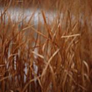 Winter Grass - 1 Art Print
