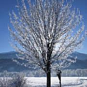 Winter In Innsbruck Art Print