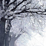 Winter In Our Street Art Print