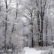 Winter In The Forest Art Print by Gabriela Insuratelu