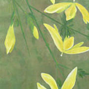 Winter Jasmine Art Print