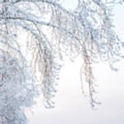 Winter Landscape With Snow-covered Trees Art Print