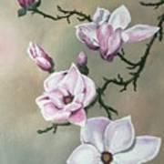 Winter Magnolia Blooms Art Print