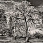 Winter Marches On Polaroid Art Print