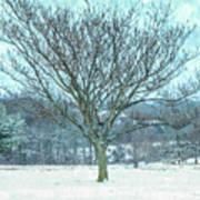 Winter Mimosa Painterly Art Print