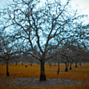 Winter Orchard Art Print by Derek Selander