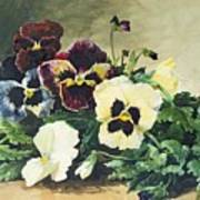 Winter Pansies Art Print