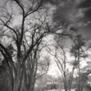 Winter Pathways Art Print
