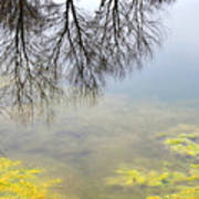 Winter Pond Reflections Art Print