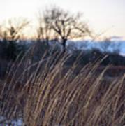 Winter Prairie Grass At Dusk Art Print