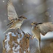 Winter Quarrel Art Print