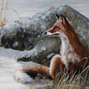 Winter Respite Art Print