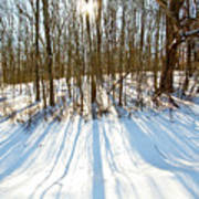 Winter Shadows Art Print by Tim Fitzwater