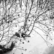 Winter Shrubs, New Hampshire Art Print