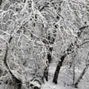 Winter Storm Skylar Art Print