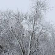 Winter Storm Art Print