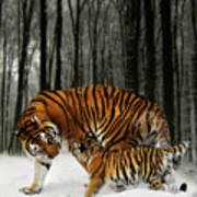 Winter Stroll Print by Julie L Hoddinott
