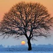 Winter Sunset With Silhouette Of Tree Art Print by Pierre Hanquin Photographie