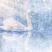 Winter Swan Art Print