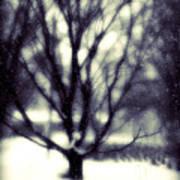 Winter Tree 3 Art Print