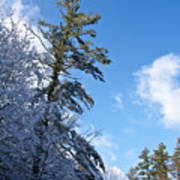 Winter Tree And Sky Art Print
