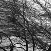 Winter Tree Branches Art Print