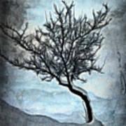 Winter Tree II Art Print