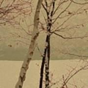 Winter Tree Over Bay Art Print