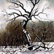 Winter Tree Stainland Art Print