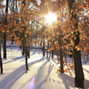 Winter Trees #1 Art Print