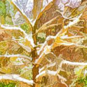 Winter Trees On Snow 2 Art Print