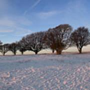 Winter Trees On The Ring Art Print