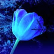Winter Tulip Blue Theme 2 Art Print