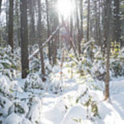 Winter Under The Sun Art Print