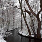 Winter Walk In The Woods Art Print